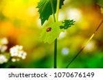 nature. spring. summer. green... | Shutterstock . vector #1070676149