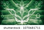 biomimicry   nature and... | Shutterstock . vector #1070681711