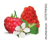 fresh  nutritious and tasty... | Shutterstock .eps vector #1070759561