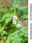 white flower and purple spot... | Shutterstock . vector #1070764601