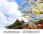 view of the beautiful cherry... | Shutterstock . vector #1070831615