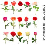 a set of roses in gift | Shutterstock . vector #107083571