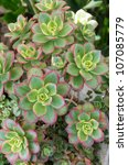 Sedum Plants Used For Green...