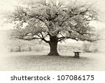 Big Tree. Composition Of Nature.