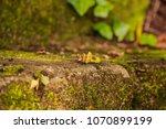 brazil  rio grande do sul ... | Shutterstock . vector #1070899199