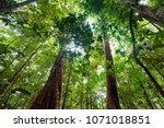 lush undergrowth jungle... | Shutterstock . vector #1071018851