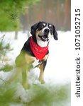 happy entlebucher mountain dog... | Shutterstock . vector #1071052715