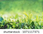 close up shot with selective...   Shutterstock . vector #1071117371