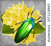 beautiful jewel beetle ... | Shutterstock .eps vector #1071118865