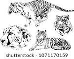 vector drawings sketches... | Shutterstock .eps vector #1071170159