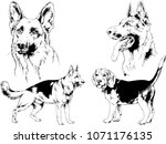 vector drawings sketches... | Shutterstock .eps vector #1071176135