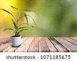 decorative grass in white... | Shutterstock . vector #1071185675