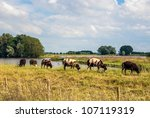 brown and white sheep grazing... | Shutterstock . vector #107119319
