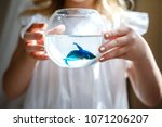 Stock photo baby girl in white dress holding a aquarium with blue fish the concept of care for pets gift 1071206207