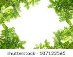 green leaves frame on white... | Shutterstock . vector #107122565
