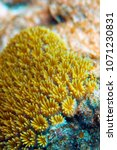 Small photo of Actinia. Beautiful and poisonous creatures and plants of the underwater world. The Great Barrier Reef.
