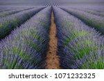 Small photo of Lavender fields in Plateau de Valensole go far in lilac color to the horizon. Alpes de Haute Provence, PACA Region, France