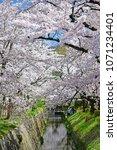 philosopher s path kyoto  ... | Shutterstock . vector #1071234401
