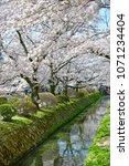 philosopher s path kyoto  ... | Shutterstock . vector #1071234404