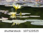 beauty water lilly flower | Shutterstock . vector #107123525