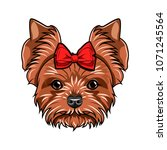 yorkshire terrier portrait. dog ... | Shutterstock .eps vector #1071245564