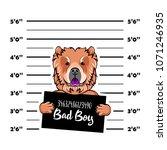 chow chow dog. prisoner ... | Shutterstock .eps vector #1071246935