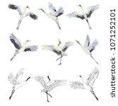 crane sketch  bird flying over... | Shutterstock .eps vector #1071252101