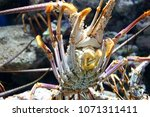 aquarium of guadeloupe and its...   Shutterstock . vector #1071311411
