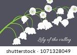 may lily. vector illustration... | Shutterstock .eps vector #1071328049