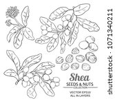 shea vector set | Shutterstock .eps vector #1071340211