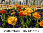 garden of spring flowers in... | Shutterstock . vector #1071344219