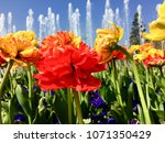 colorful flowers in spring | Shutterstock . vector #1071350429