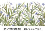 botanical decor. botanical... | Shutterstock . vector #1071367484