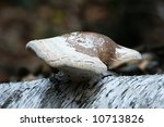 A Mushroom Growing From A Trun...