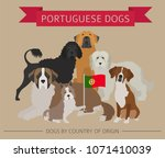 dogs by country of origin.... | Shutterstock .eps vector #1071410039