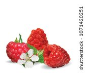 fresh  nutritious and tasty... | Shutterstock .eps vector #1071420251