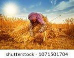 An Old Indian Woman Farmer...