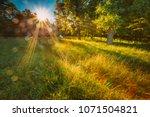 sun shining through greenery... | Shutterstock . vector #1071504821