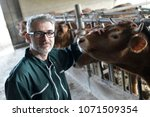 farmer in barn checking on... | Shutterstock . vector #1071509354