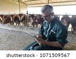 cow breeder checking on... | Shutterstock . vector #1071509567
