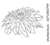 beautiful monochrome sketch ... | Shutterstock . vector #1071583799