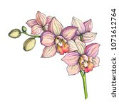 Vector Color Blooming Orchid...