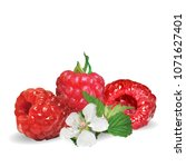 fresh  nutritious and tasty... | Shutterstock .eps vector #1071627401