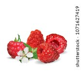 fresh  nutritious and tasty... | Shutterstock .eps vector #1071627419