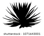 close up of silhouette agave... | Shutterstock . vector #1071643001