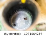nectar from sugar palm in... | Shutterstock . vector #1071664259
