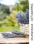 lavender background. lavender... | Shutterstock . vector #1071664901
