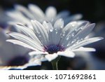 rain drops on the white color...   Shutterstock . vector #1071692861