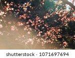 autumn maple leaf in showa... | Shutterstock . vector #1071697694