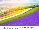 Rainbow Flowers Lavender And...